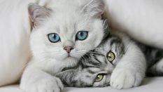 Kedi Besleme İçin Mama Kullanımının Önemi